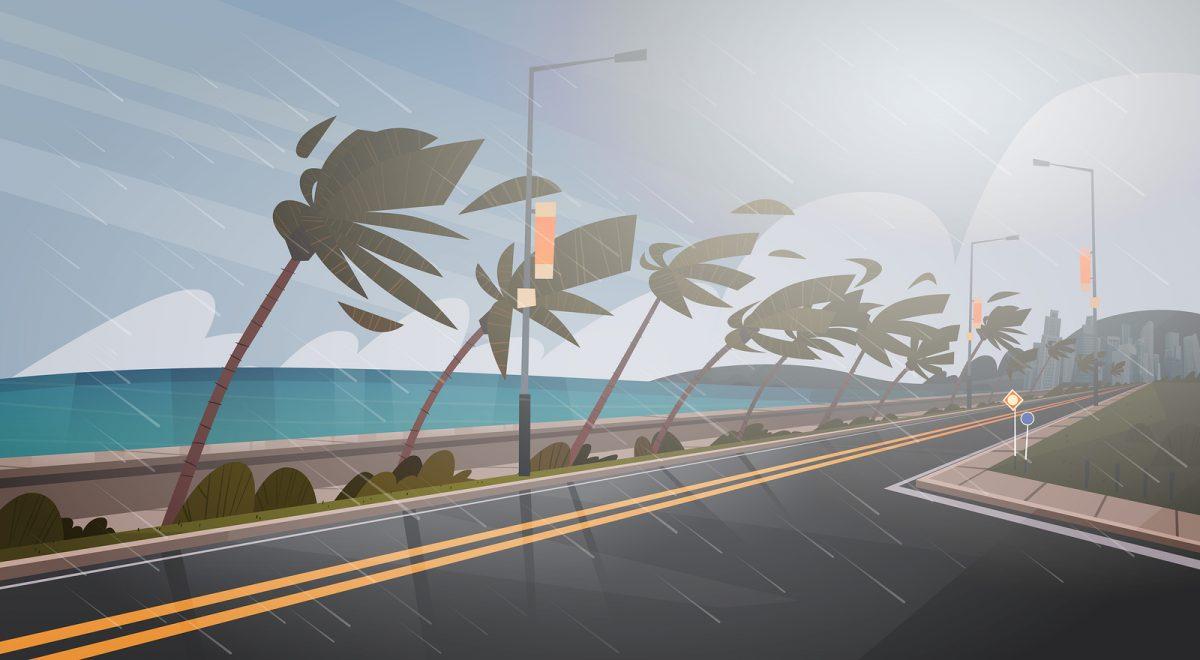Boca Raton Hurricane Windows Guide