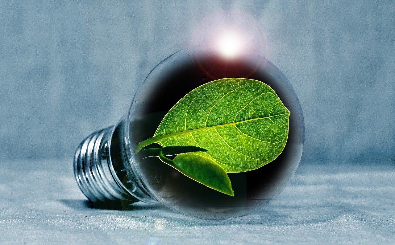 green leaf inside energy bulb sustainability